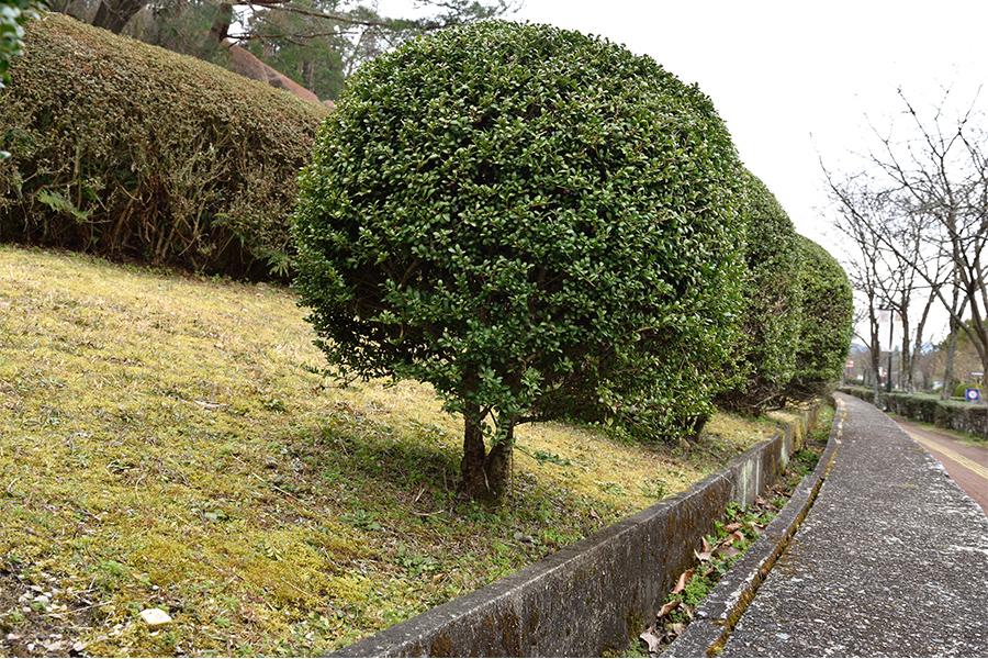 植木の剪定刈込