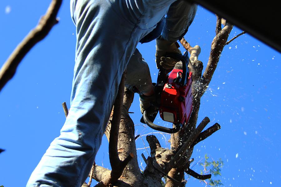 植木の伐採