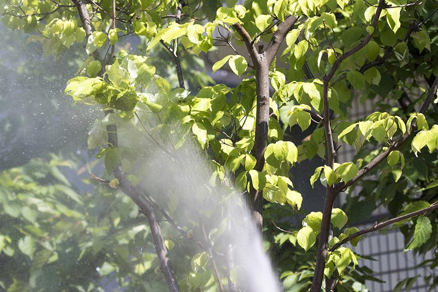 植木の消毒(殺虫剤散布)